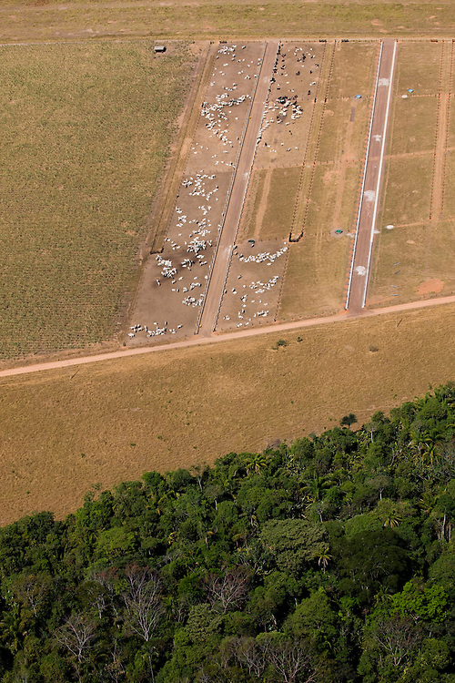 Cattle graze on ranchland  in Mato Grosso,m Brazil, August 6, 2008..Daniel Beltra/Greenpeace
