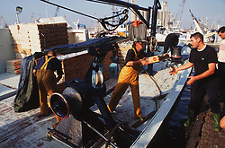 Spanish fishermen offloading their catch from fishing boat at Tarragona fish docks; Spain,