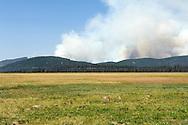 Halstead fire near Stanley Idaho on 7-31-12