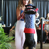 Macie Mangum, 9, dances with her dog Sookie, 2, for their talent Saturday at the Elvisfest Pet Parade