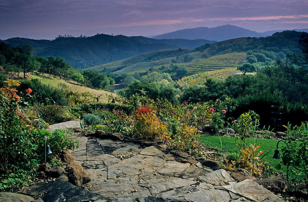 Vineyards at Kuleto Estate Winery, above Highway 128, Napa County, California