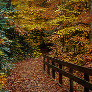 Autumn pathway to the forest