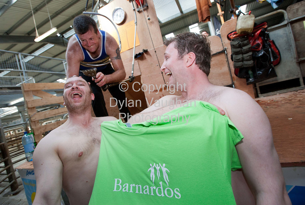 4/6/2011.Robin Gahan (left) from Kilcullen and Paul Kavanagh from Maynooth pictured on Robin's stag with shearer Geoff Coller at the 24 hour sheep shear in aid of Barnardos at the 2011 Sheep and Wool festival in Cillin Hill Kilkenny over the weekend..Picture Dylan Vaughan.
