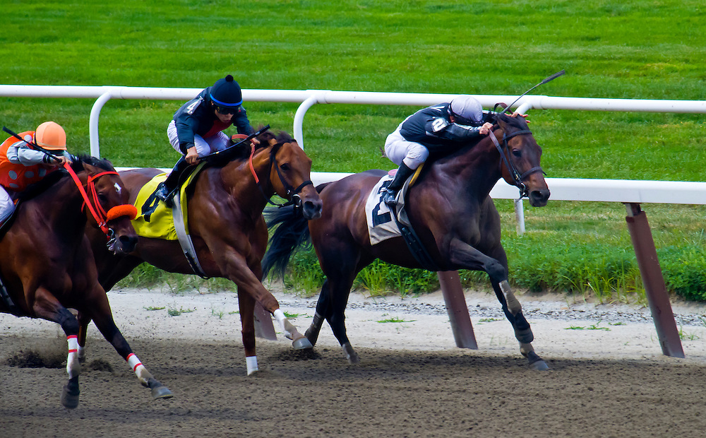 """First of Two. Jockey Javier Castellano aboard """"Call Me Tony"""" in deep stretch. He won that day. I believe he has been racing many years, and the race was a $10,000 claimer."""