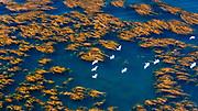 Birds in flight over kelp bed, Santa Cruz Island, Channel Islands National Park, California