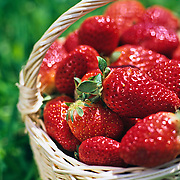 Basket with strawberries laying on the grass. Mexico.