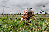 Java Agriculture in Jeopardy