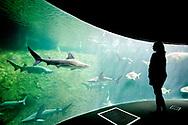 The shark tank in Nausicaá's Mankind and Shores exhibition, Boulogne-sur-Mer, Pas-de-Calais, France © Rudolf Abraham