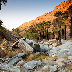 Indian Canyon, Palm Springs, CA