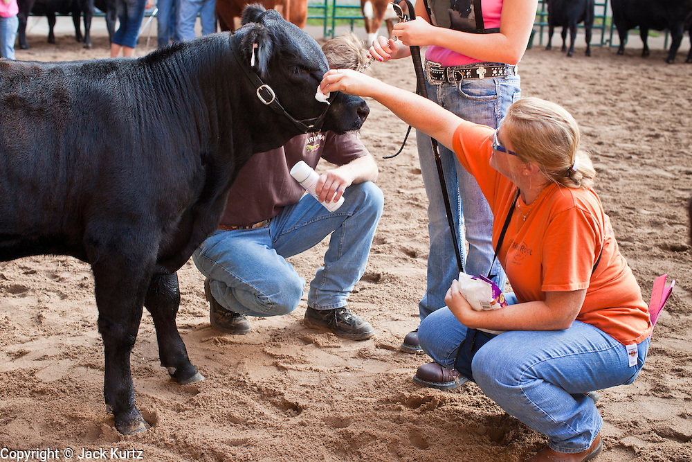 """03 SEPTEMBER 2011 - ST. PAUL, MN: A woman grooms a cow before showing it at the Minnesota State Fair, Saturday, Sept. 3. The Minnesota State Fair is one of the largest state fairs in the United States. It's called """"the Great Minnesota Get Together"""" and includes numerous agricultural exhibits, a vast midway with rides and games, horse shows and rodeos. Nearly two million people a year visit the fair, which is located in St. Paul.   PHOTO BY JACK KURTZ"""