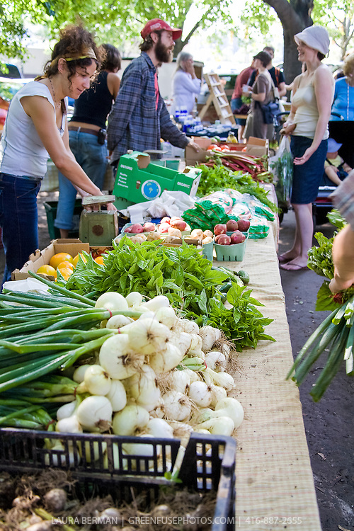Plan B Organic Farms market table at Dufferin Grove Farmers Market