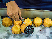 "28 OCTOBER 2014 - BANGKOK, THAILAND: A worker pulls cakes out of the oven at the Pajonglak Maneeprasit Bakery in Bangkok. The cakes are called ""Kanom Farang Kudeejeen"" or ""Chinese Monk Candy."" The tradition of baking the cakes, about the size of a cupcake or muffin, started in Siam (now Thailand) in the 17th century AD when Portuguese Catholic priests accompanied Portuguese soldiers who assisted the Siamese in their wars with Burma. Several hundred Siamese (Thai) Buddhists converted to Catholicism and started baking the cakes. When the Siamese Empire in Ayutthaya was sacked by the Burmese the Portuguese and Thai Catholics fled to Thonburi, in what is now Bangkok. The Portuguese established a Catholic church near the new Siamese capital. Now just three families bake the cakes, using a recipe that is 400 years old and contains eggs, wheat flour, sugar, water and raisins. The same family has been baking the cakes at the Pajonglak Maneeprasit Bakery, near Santa Cruz Church, for more than 245 years. There are still a large number of Thai Catholics living in the neighborhood around the church.   PHOTO BY JACK KURTZ"