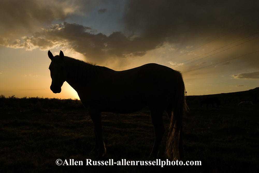Horse, silhouette