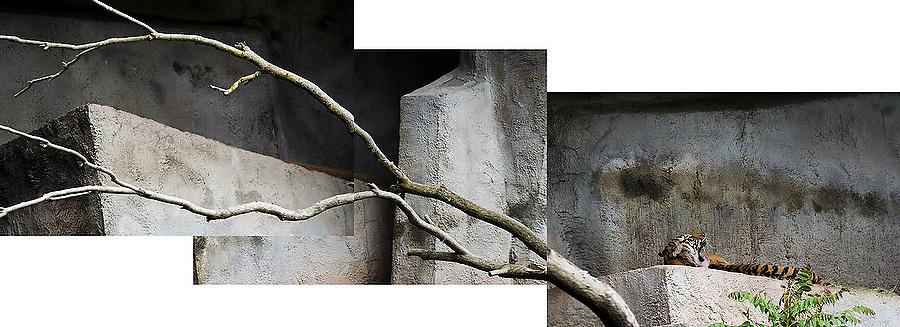 Photo mosaic of the concrete enclosure of a Sumatran tiger (Panthera tigris sumatrae), an endangered species, at the Woodland Park Zoo in Seattle, Washington.
