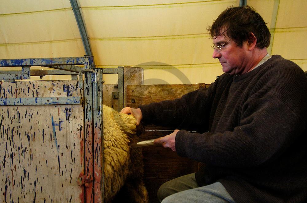 14/03/05 - LANGERON - NIEVRE - FRANCE -  Elevage de brebis croisees Charolaises Ile de France et Texel  - Photo Jerome CHABANNE
