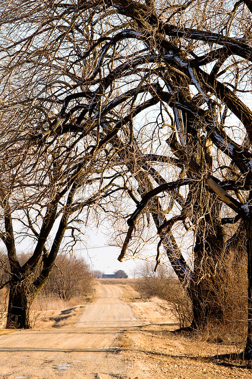 Large and ominous trees overhang a rural gravel road.