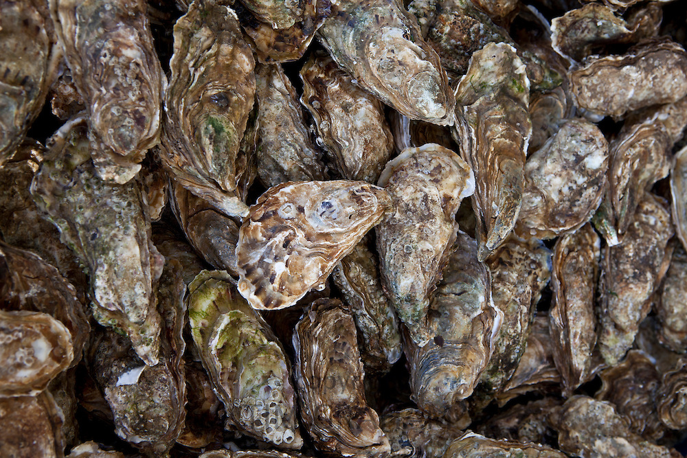 Freshly-caught live oysters, fin de claires, on sale at food market at La Reole in Bordeaux region, France