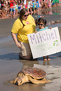 A young girl watches Mitchell, a 65-pound juvenile loggerhead sea turtle back to the ocean during the release of rehabilitated sea turtles August 6, 2014 in Isle of Palms, South Carolina. The turtle was found entangled in a fishing line, malnourished and covered in barnacles and rehabilitated by the sea turtle hospital at the South Carolina Aquarium in Charleston.