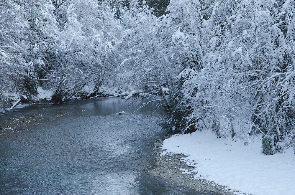 Snow covered trees along banks of the Nooksack River North Cascades, Wssdhington
