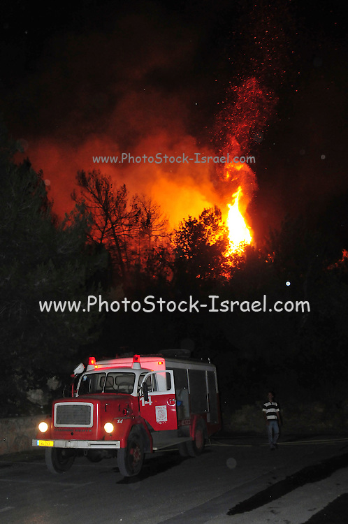 Israel, Haifa Carmel Mountain Forest, fire fighter fighting the flames at night