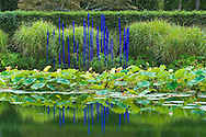 Dale Chilhuly glass sculpture, Long House Reserve, East Hampton,Long Island,  NY, Long House Reserve, East Hampton, Long Island,  NY