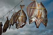 Drying Fish<br /> Macushi people<br /> Yupukari village<br /> Savannah, Rupununi<br /> GUYANA<br /> South America