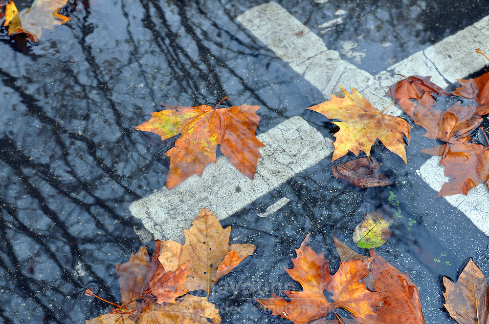 Leaves wait for a storm drain opening to clear at the corner of Clay Street and Lincoln Avenue on Tuesday in Salinas. Rain showers are expected throughout the first week of December.