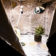 A grow tent at a private residence in Colorado.