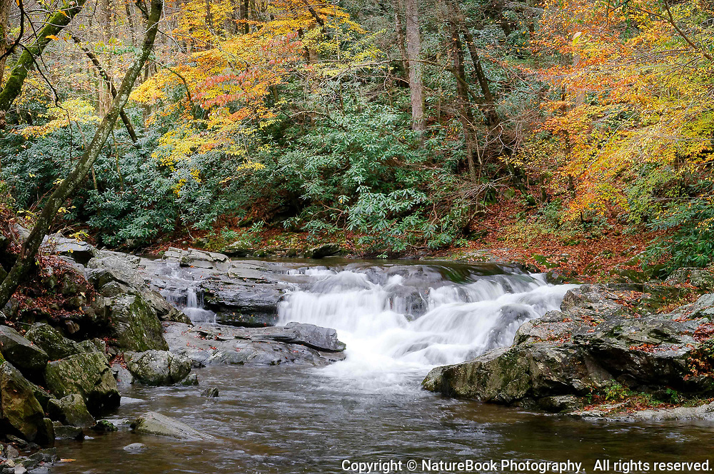Chilly water flows quietly in a stream during late fall at Great Smoky Mountains National Park