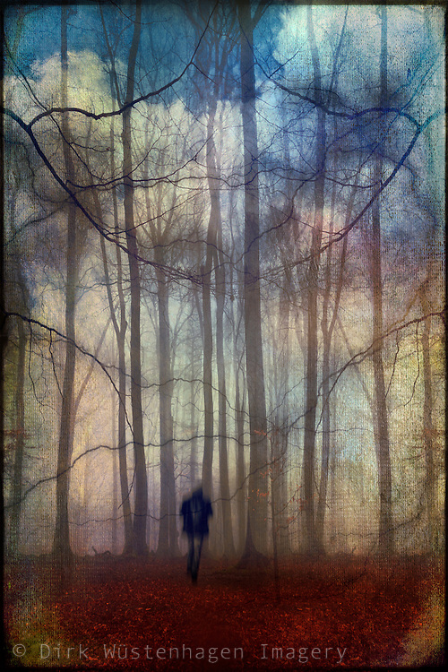 Voyge into a fantastic and colourul forest<br />