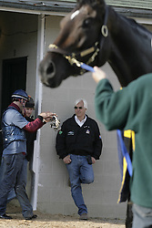 Sire of American Pharoah Pioneer of the nile on the track in preparation for Kentucky Derby 135, Saturday, April 18, 2009 at Churchill Downs in Louisville.