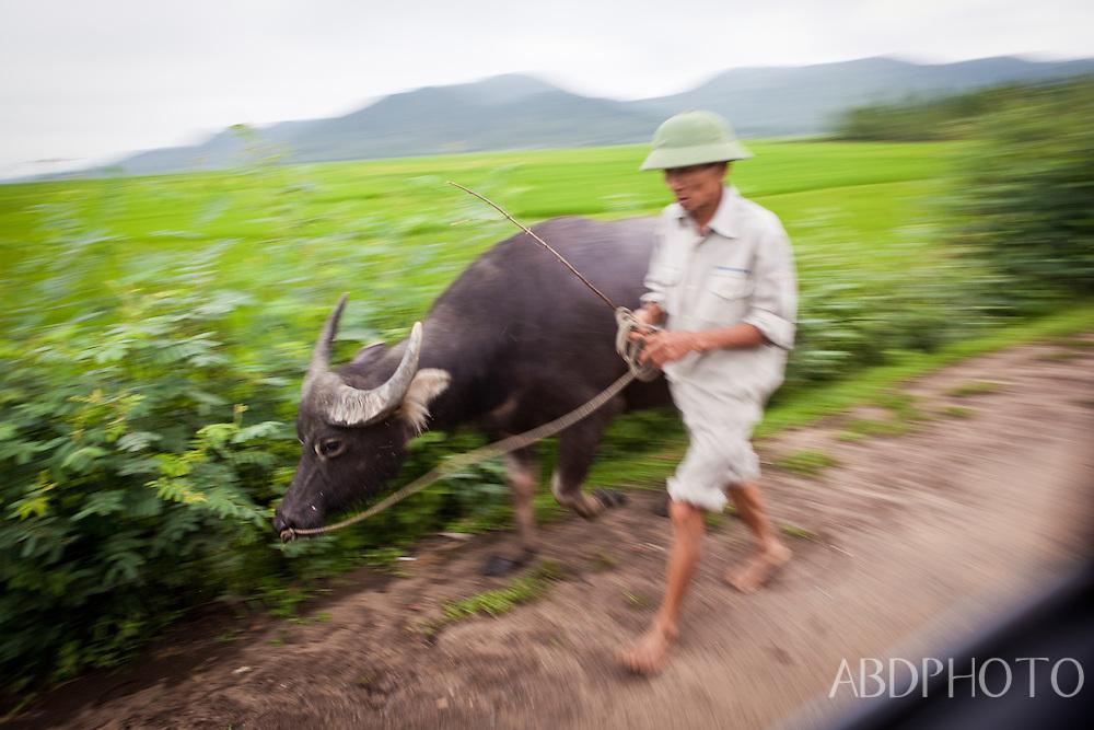 vietnam NGO