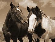 Cote's Horses