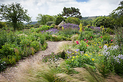Stipa tenuissima, verbascums and poppies in the gravel garden at Holt Farm