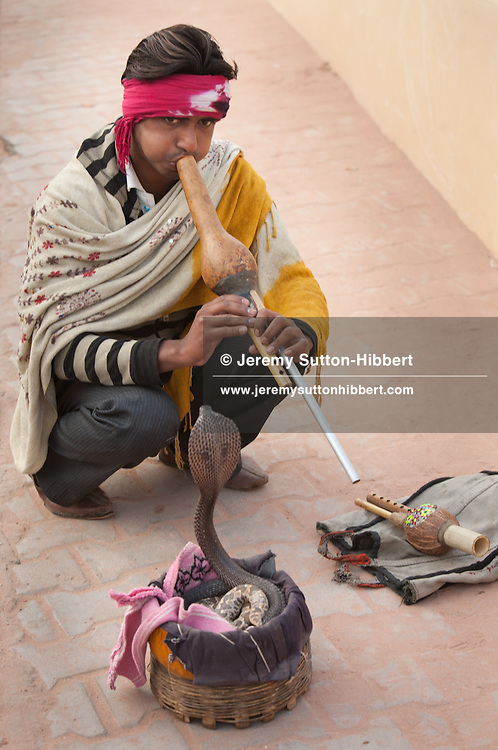 Snake charmer with cobra, at Amber Fort, outside Jaipur, in Rajasthan, India, on 30th December 2011.