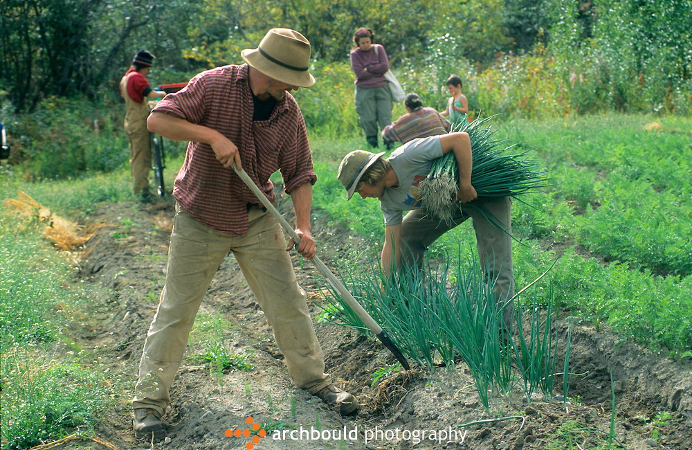 Farming in the Yukon, Canada.<br /> <br /> NOT IN YOUR BUDGET? Contact Cathie for a price specific to your project.