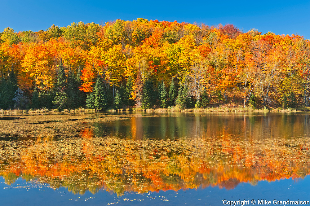 Deciduous forest in autumn colors on shore of Paudash Lake<br />Paudash Lake<br />Ontario<br />Canada