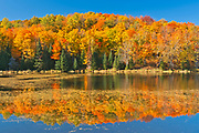 Deciduous forest in autumn colors on shore of Paudash Lake<br />