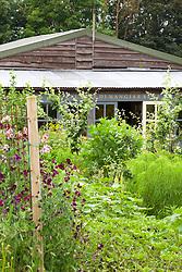 Worton Organic Farm Shop with sweet peas in the foreground. Lathyrus odoratus