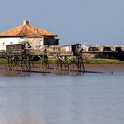 Régate entreprise SUCTUM à La Rochelle