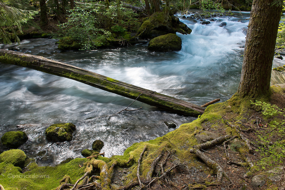 Upper Dungeness River: Starting high in the Olympic Mountains, the Dungeness is the second steepest river in the U.S., dropping 7300 feet in elevation as it flows 32 miles to the sea in Sequim, WA.