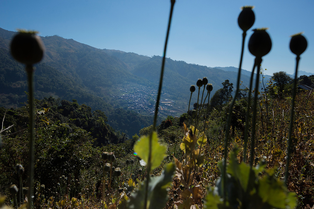 20170223 Shan state<br /> Poppy pods on a mountain side overlooking a village in the mountains of Shan State, Myanmar.<br /> Photo: Vilhelm Stokstad / Kontinent