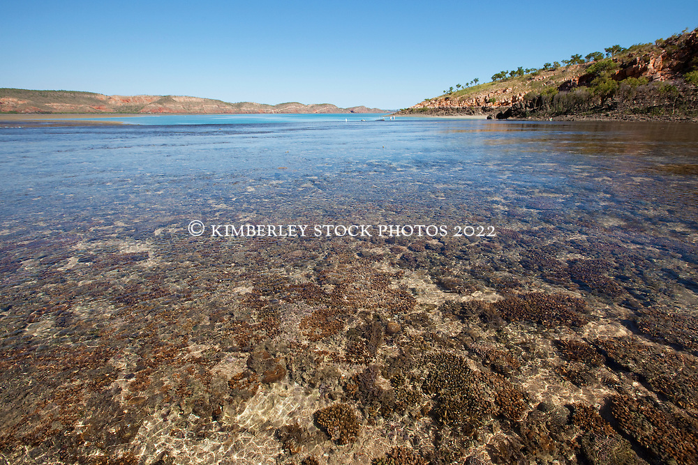 Turtle Reef in Talbot Bay is a massive fringing reef system.  The reef joins islands with the mainland.  The McLarty Range is in the background.