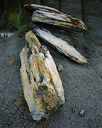 AA02187-01...NORTH DAKOTA - Petrified wood in the South Unit of Theodore Roosevelt National Park.
