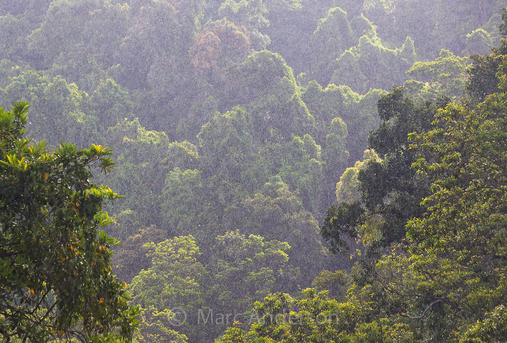 View of tropical rainforest in the rain,  Wooroonooran National Park, near Babinda, Queensland, Australia