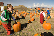 Children picking pumpkins during a ride on Thunder Mountain, an entertaining and scenic train ride in Horeseshoe Bend, Idaho .  Model Release