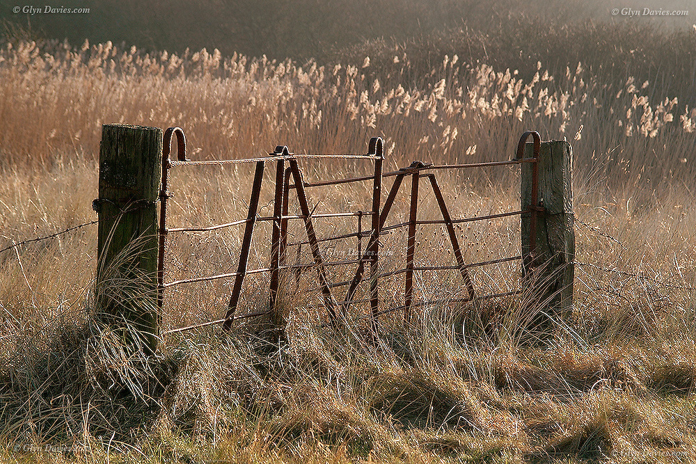 Disused gateway and rush covered fields at Llanddona, Anglesey<br />