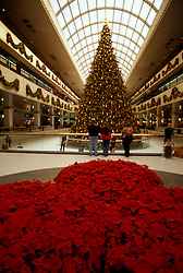 Stock photo of Christmas tree and poinsettia flowers decorating the Galleria and ice skating rink