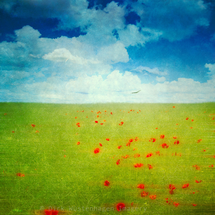 Abstraction of a field with poppy flowers<br />