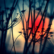 Silhouettes of dry weeds at sunrise on a frosty winter morning - manipulated texturized photograph<br />